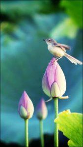 fondo-flor